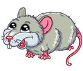Cute rat Stock Photography