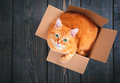 Cute red cat in a cardboard box. Royalty Free Stock Photo