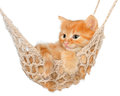 Cute red haired kitten in hammock on a white background Stock Images