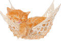 Cute red haired kitten sleeping in hammock Royalty Free Stock Photo
