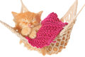 Cute red haired kitten sleeping in hammock on a white background Royalty Free Stock Photos