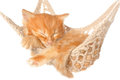 Cute red haired kitten sleeping in hammock on a white background Royalty Free Stock Photo