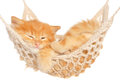 Cute red haired kitten sleeping in hammock on a white background Stock Photo