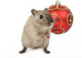 Cute rodent by Christmas decorations on snow white background Royalty Free Stock Photo