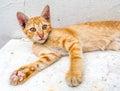 Cute Scared Kitten On Floor