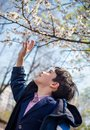 Cute school boy trying to reach the apricot blossom on the tree Royalty Free Stock Photo