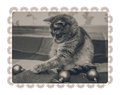Cute Scottish cat is playing with christmas balls.Checkered plaid.Black and white,toned.Lace frame.Isolated on white Royalty Free Stock Photo
