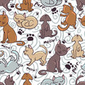 Cute seamless pattern with kittens funny Stock Images
