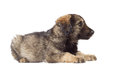 Cute shaggy mutt on a white background Stock Photography