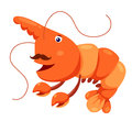 Cute shrimp  Stock Images