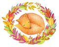 Cute sleeping fox in autumnal leaves. Royalty Free Stock Photo