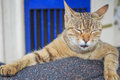 Cute sleeping yellow cat Royalty Free Stock Photo
