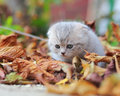 Cute small kitten sitting on autumn bright colorful foliage Royalty Free Stock Photos
