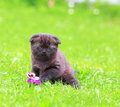 Cute small kitten sitting on green grass outdoors summer background Stock Photos