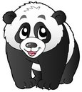Cute small panda Stock Photography