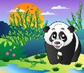 Cute small panda in bamboo forest Stock Photos