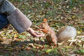 Cute small Squirrel Royalty Free Stock Photo