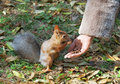 Cute small Squirrel Stock Image