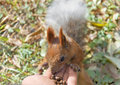 Cute small Squirrel Stock Photo