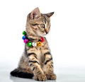 Cute small witten with a necklace studio shot Royalty Free Stock Photo