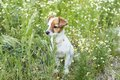 Cute small young dog among the flowers and green grass. Spring. Royalty Free Stock Photo