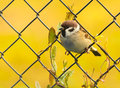 Cute sparrow resting on fence in autumn season Stock Images