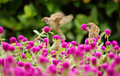 Cute sparrow stand on the beautiful purple flowers Stock Image