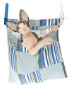 Cute Sphynx kitten in clothes peg bag Stock Image