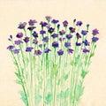 Cute spring hand drawn watercolour violet small dark flowers