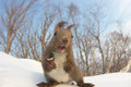 Cute Squirrel by fish eye lens Stock Photo