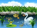 Cute swan swimming on the pond and frog Royalty Free Stock Photo