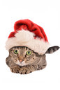 Cute tabby cat in a christmas hat holiday theme santa Stock Image