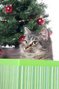 Cute tabby cat in a gift box Stock Photo