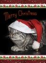 Cute tabby cat with saint nicholas cap, christmassy border, card Royalty Free Stock Photo