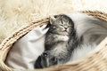 Cute tabby kitten sleeping Royalty Free Stock Photo