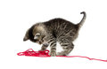 Cute tabby kitten with yarn baby playing red on white background Stock Photos
