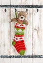 Cute Teddy Bear with christmas stocking sock decoration Royalty Free Stock Photo
