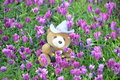 Cute teddy bear in a field of purple dasies Royalty Free Stock Photo
