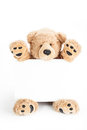 Cute teddy bear holding blank white board happy Royalty Free Stock Image