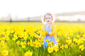 Cute toddler girl field of yellow daffodil flowers beautiful curly in a blue dress playing in a on a sunny summer evening Stock Photo
