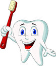 Cute tooth cartoon holding tooth brush illustration of Stock Images