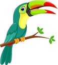 Cute toucan bird cartoon on white background Royalty Free Stock Images