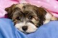 Carino cane letto