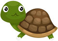 Cute turtle Royalty Free Stock Photography