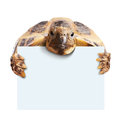 Cute turtle holding a blank white board isolated on Royalty Free Stock Image