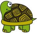Cute turtle peeking Royalty Free Stock Photo