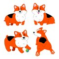 Cute Welsh Corgi dog - modern flat design style set of characters