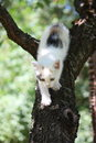 Cute white kitten climbing down from the tree Royalty Free Stock Photo