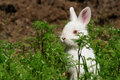 Cute white rabbit hides on grass Royalty Free Stock Photo