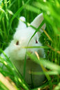 Cute white rabbit hides on grass Stock Photography